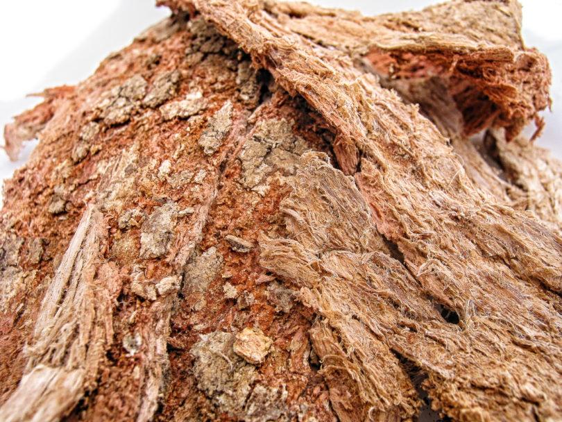Semialarium mexicanum - Cancerina