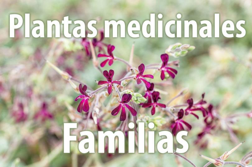 Familias de plantas medicinales