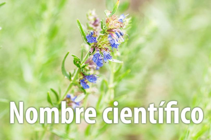 Nombres científicos de las plantas medicinales
