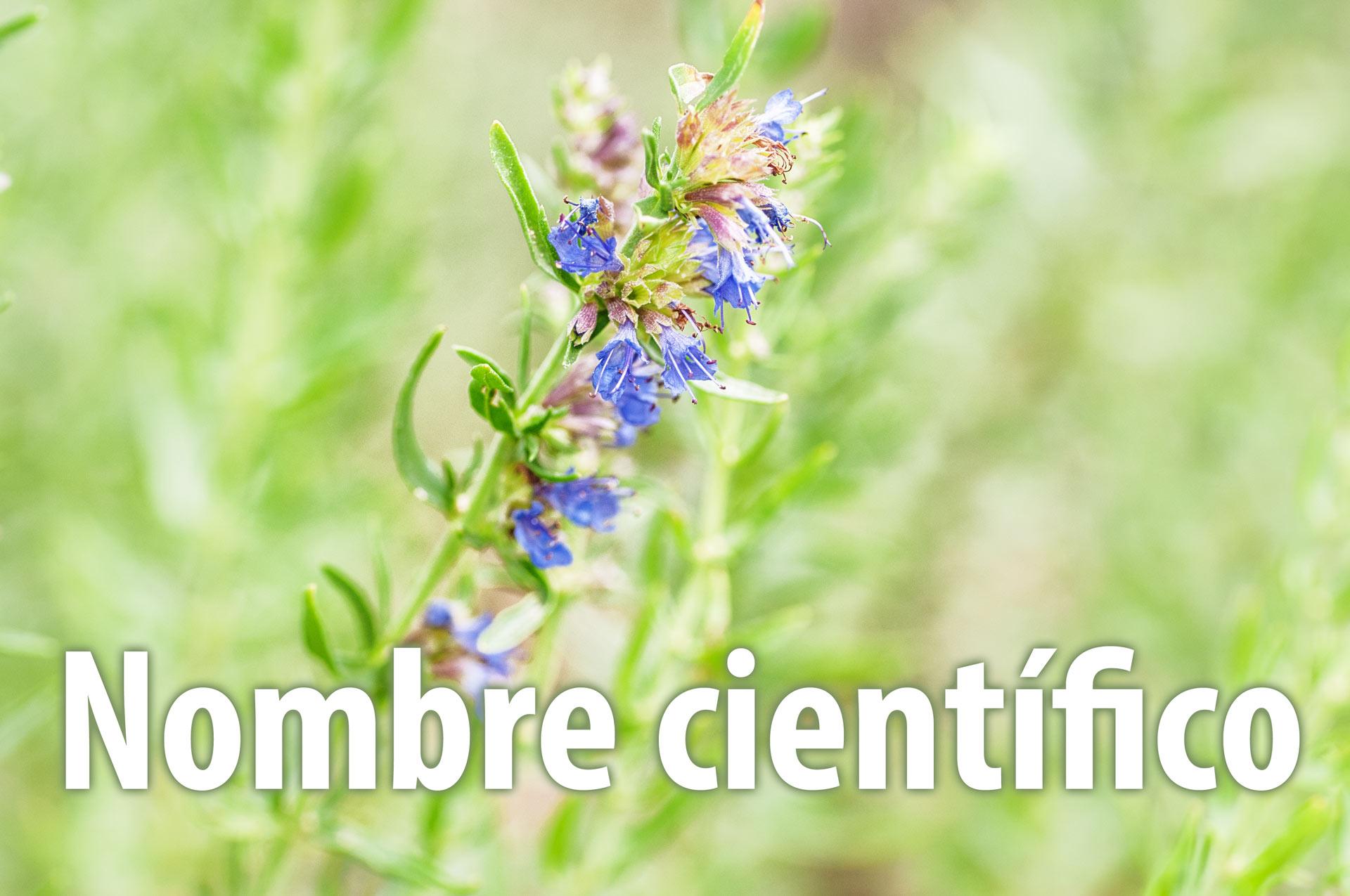Nombres cient ficos de las plantas medicinales plantas for 5 nombres de plantas ornamentales