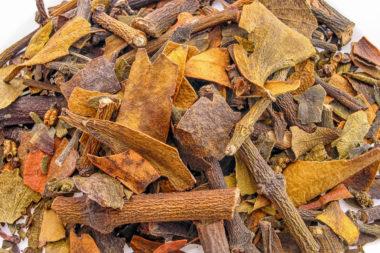Psittacanthus calyculatus – Muerdago