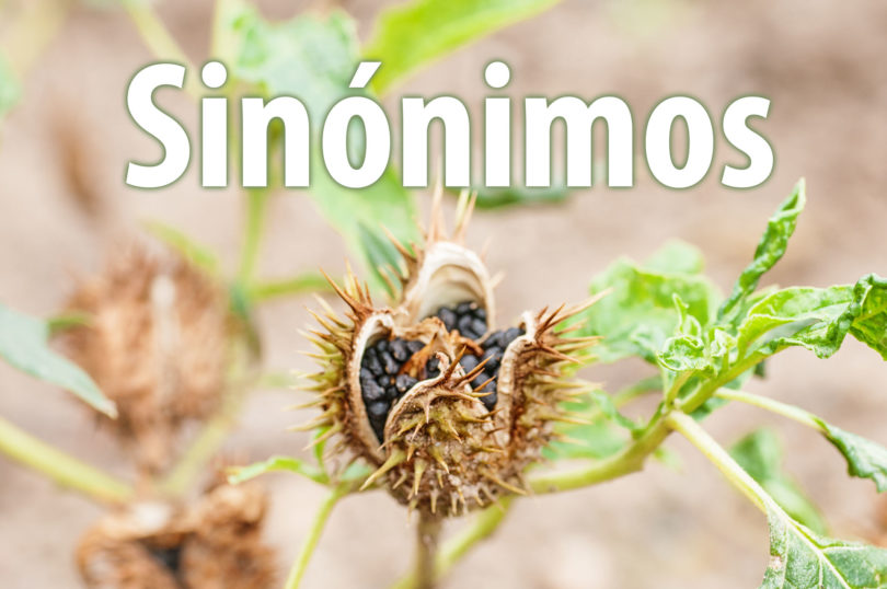 Sinónimos de plantas medicinales